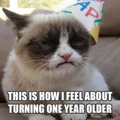 Grumpy-Cat-Birthday-Memez