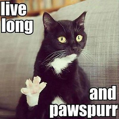 Live-Long-And-Pawspurr