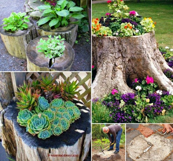 Tree Stump: Small Space Garden Ideas To Pep-Up The Look Of Your House