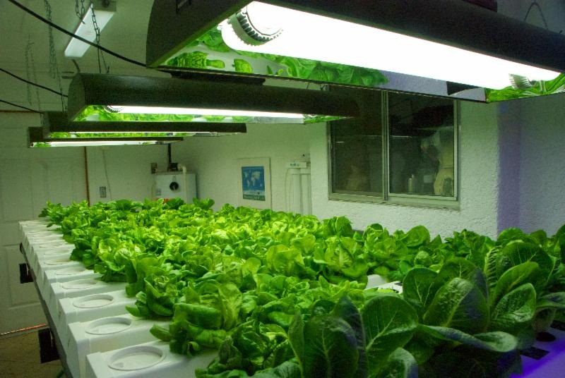 How to grow plants in winters under led grow lights for Indoor gardening lighting guide