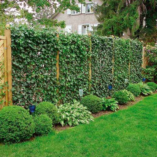 Smart ideas to make an impressive fence line of your yard for Climbing flowering plants for fences