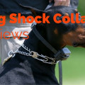 Top 10 Dog Shock Collars Reviews