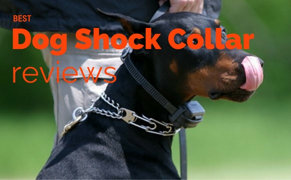 Best Dog Training Collar Pick