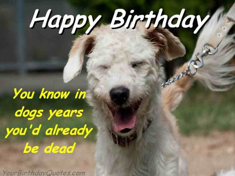 Birthday-Dog-Funny-Meme
