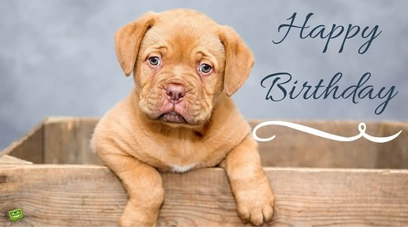 Cute-Dog-Wishes-Happy-Birthday-Picture