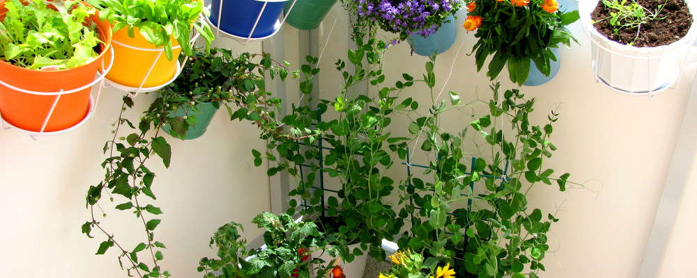 Growing Vegetables on a Balcony