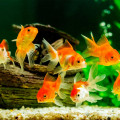 7 Best Cheap Fish Tanks under $50