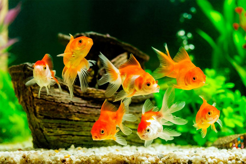 Discovery Top 7 Best Cheap Fish Tanks under $50 in 2017