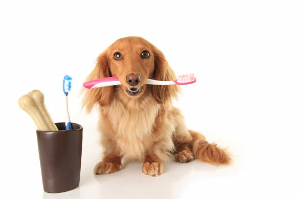 Brushing Your Dogs Teeth at Home
