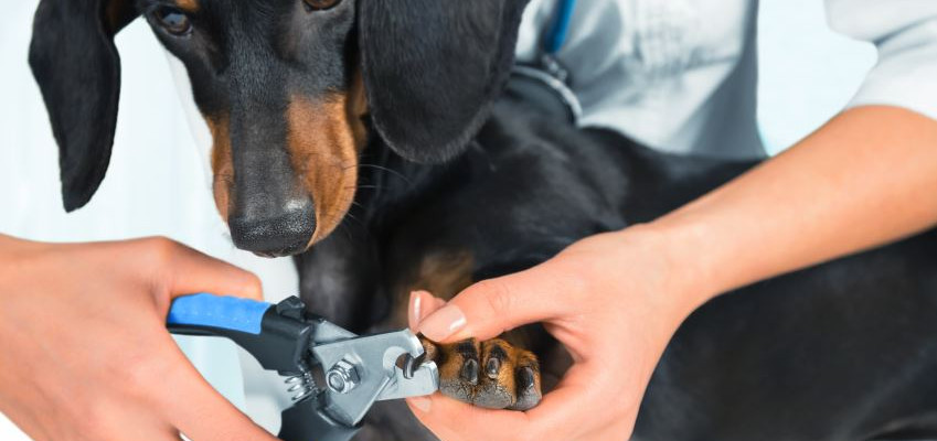 Choosing a Dog Nail Trimmer