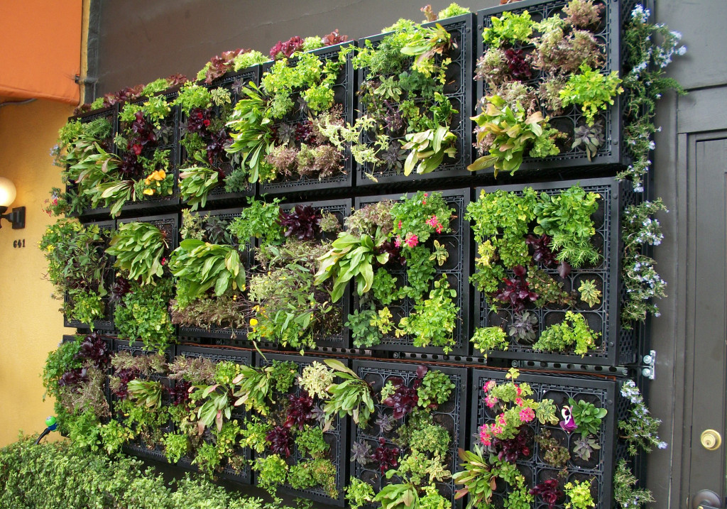 Vertical Gardening Basics How To Make A Pretty Garden