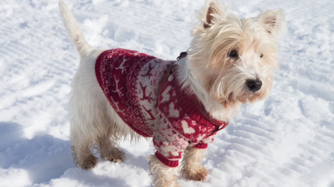 Products That Keep Your Pets Warm In Winters
