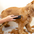 dog clipping