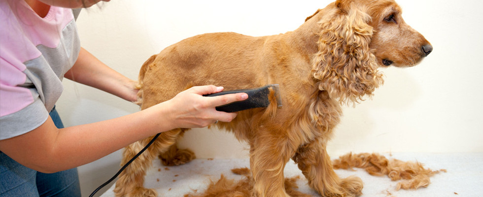 How To Clip Dogs Hair At Home- Step By Step Guide