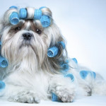 Types of Dog Haircuts - How To Groom Your Dogs