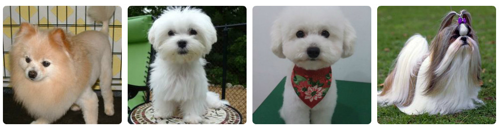 Haircuts Style for Long Hair Dogs