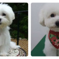 dogs haircut styles