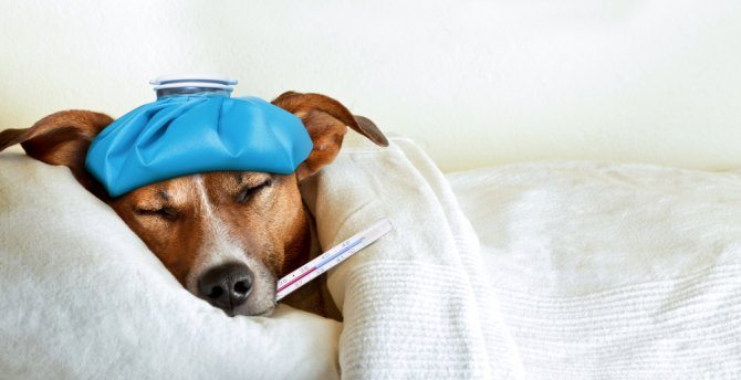 Dog's Eye Problems – Take Care Of Your Little Friends