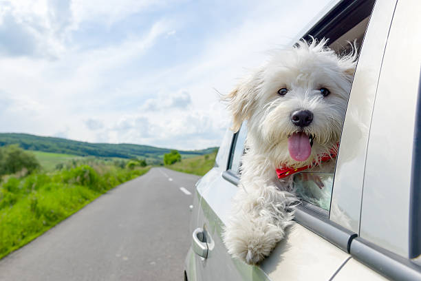 travel by a car with pet