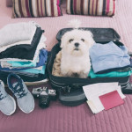 Caring Of Pets While You Take A Trip With Them