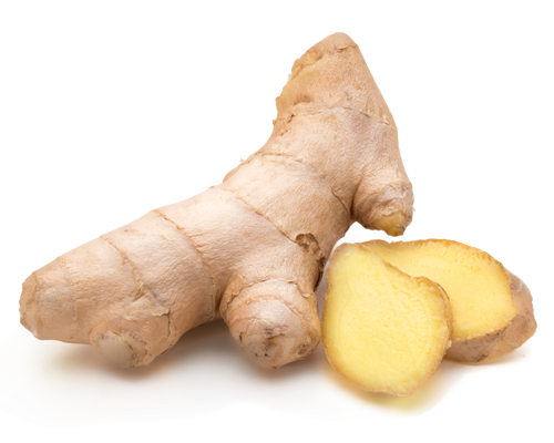 Ginger – Zingiber Officinale