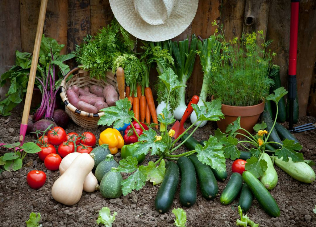 Healthy Vegetable Growing