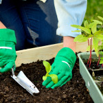 Five Simple Organic Gardening Ideas - Tips For Garden Growing