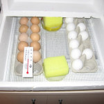 Best Egg Incubator Reviews