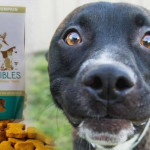 10 Best CBD Dog Treats Reviews